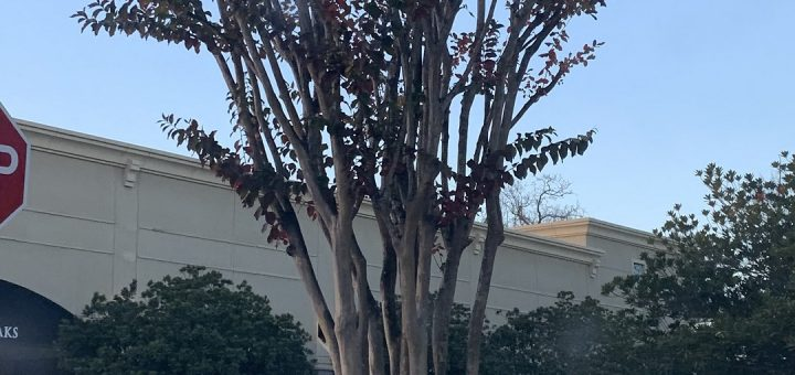 Tree_Service_of_Houston_best_tree_service_near_me_6730_Woodlands_Pkwy_The_Woodlands__TX_77382